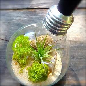 Light Bulb Terrarium Extinction? - Craft Organic