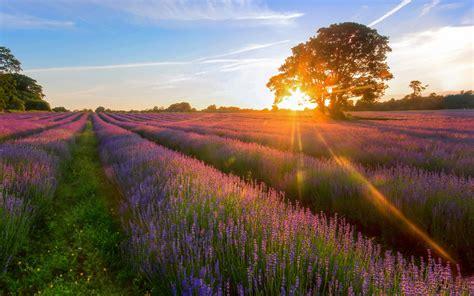 唯美的薰衣草风景壁纸_绝美的紫色花海_风景壁纸_