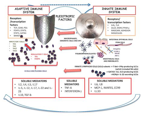 ijms  full text  innate  adaptive immune