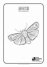Moth Coloring Pages Cool Print Animals Insects Butterfly Wingspan Mm Different Fly sketch template
