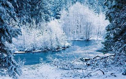 Winter Snow Forest Wallpapers Nature Icy Desktop