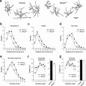 Fig Ure 4 Dendritic Features Of Layer Iv Spiny Stellate
