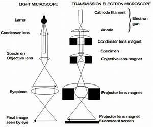 3  Microscopy