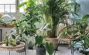 Plante D Intérieur Haute : 19 plantes d int rieur qui n ont pas besoin de lumi re du ~ Dode.kayakingforconservation.com Idées de Décoration