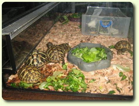 aquarium pour tortue terrestre tortues terre terrarium clasf