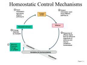 Feedback Mechanism Homeostasis Examples