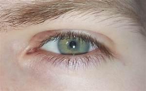 Grüne Augen Häufigkeit : in meinem ausweis steht ich h tte gr ne augen aber irgendwie sind die auch blau was meint ~ Frokenaadalensverden.com Haus und Dekorationen