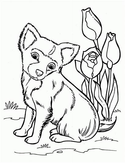 Coloring Husky Pages Puppy
