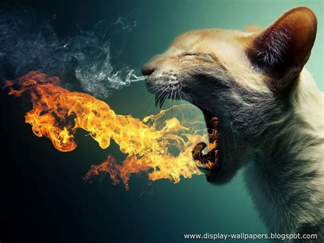 wallpapers   animals funny wallpapers collection