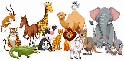 Animals Wild Clipart Different Kind Illustration Vector