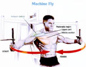 Pec Deck Fly Muscles Worked by Chest Wallpaper