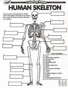 10  5th Grade Skeletal System Worksheet