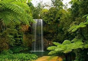 Fototapete Tapete Natur Dschungel Wasserfall Pflanzen Foto