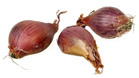 what are shallots separated by a common language shallot