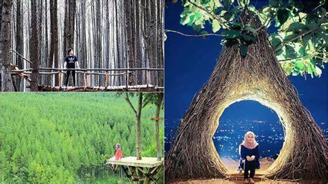 destinasi wisata hutan pinus  liburan anti