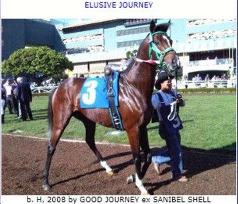 thoroughbred elusive stallion stud journey legacy horse bay