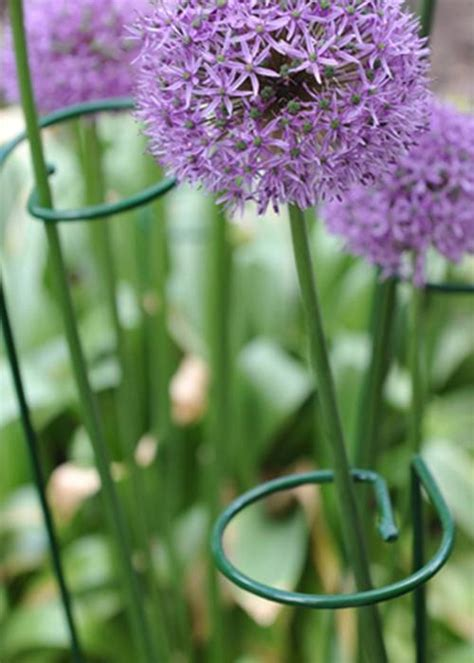 Stable Gathering Rings for Tall Flowers & Single Stem