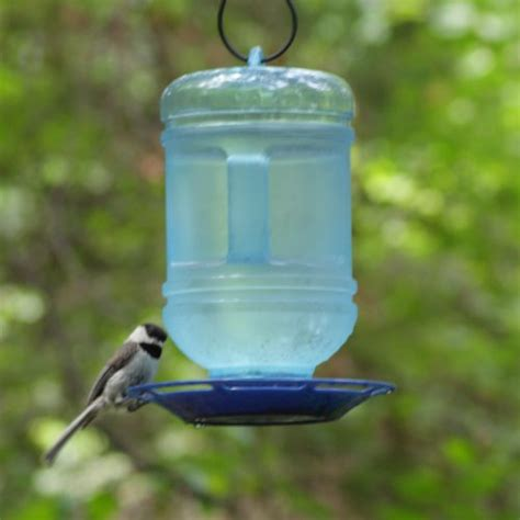 bird water feeder bird water images