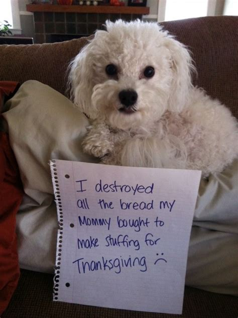 dogs  ruined thanksgiving dinner