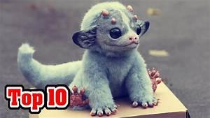 Top 10 Most Unusual Extinct Animals - YouTube