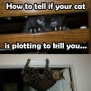 how to tell if a cat is or how to tell if your cat is plotting to kill you by kiyratrayata meme center