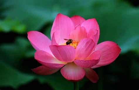 foto di fiori belli immagini di fiori bellissimi cina i bellissimi fiori di