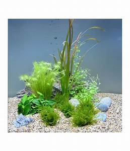 Pflanzen Für Aquarium : planet plants 20er set 7 bund 2 topf aquarium pflanzen dehner ~ Buech-reservation.com Haus und Dekorationen