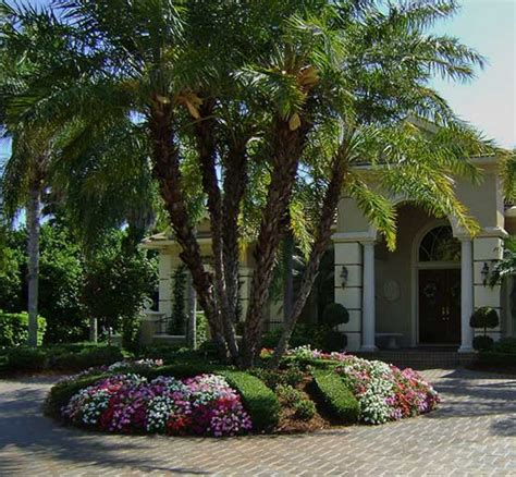 fl landscaping florida friendly landscaping ideas jbeedesigns outdoor palm trees florida landscaping ideas