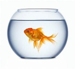 Not An Nfl Fan  Watch The Fish Bowl