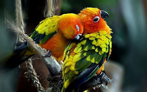 Parrots Wallpapers  Parrots Stock Photos