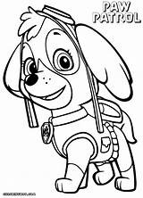 Paw Patrol Coloring Pages Zuma Printable Skye Getcolorings sketch template