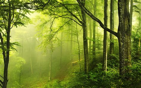 Green Forest Photo Hd by Green Forest Picture Of A Stunning Hd