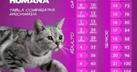 cuanta fauna edad de los gatos en escala  la humana