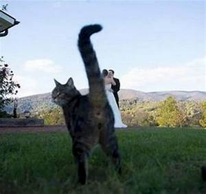 Light Flavored 12 Images Of Mischievous Cats Causing Trouble