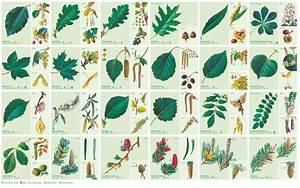 Immergrüne Sträucher Und Bäume : b ume und str ucher des waldes unsere natur rhein zeitung ~ Michelbontemps.com Haus und Dekorationen