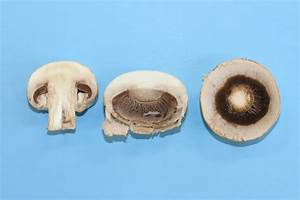 Reading  Fungi