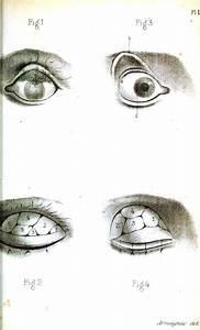 Vintage Eye Diagram  Anatomy  Eye