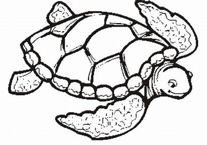 Turtle Coloring Sea Pages Swimming