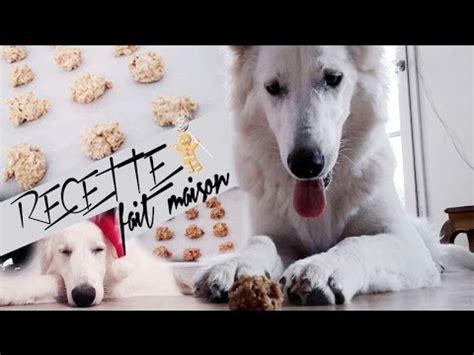 recette biscuit pour chien fait maison facile et rapide