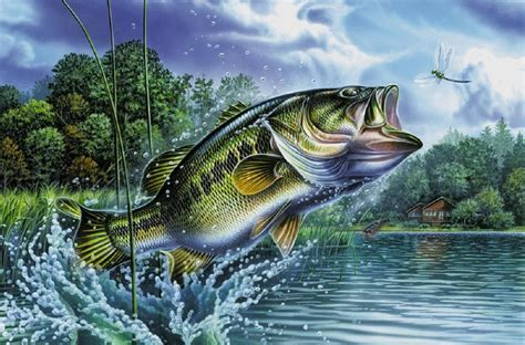 Images Of Bass Fish Bass Fish Jumping Out Of Water