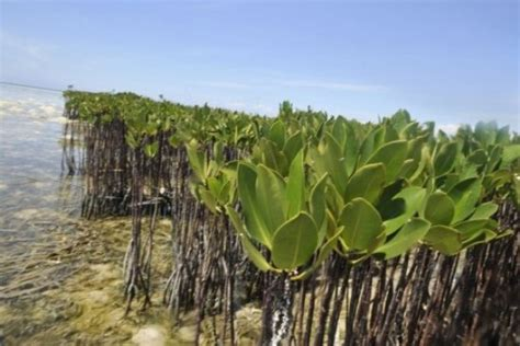 Qatar Must Curb Development to Save Mangroves | Green Prophet