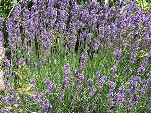 Was Vertreibt Bienen : galarosa bienen leben in ~ Eleganceandgraceweddings.com Haus und Dekorationen