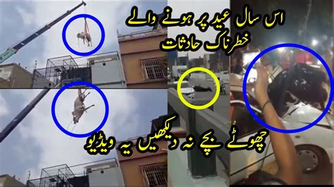 Angry Bull Goes Out of Control Before Qurbani | Eid-ul ...