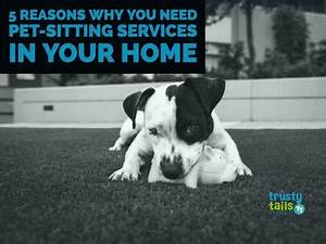 Five reasons why you need pet sitting services in your for Dog sitting in your home