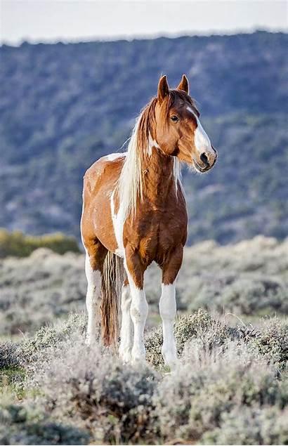 Wild Horses Horse Photographs Opening Colorado Enews
