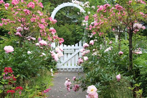 fishtail cottage fishtail cottage garden 5 25 15