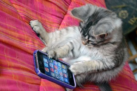 cat iphone 18 text messages from mittens the iphone using cat