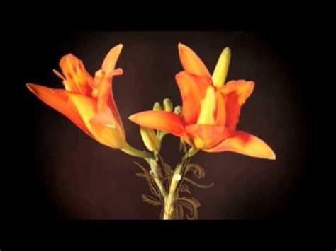 diffenbaugh il linguaggio segreto dei fiori il linguaggio segreto dei fiori diffenbaugh