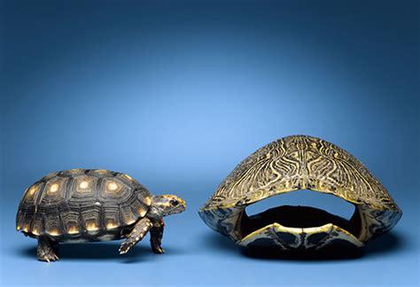 mistakes  avoid   pet turtle pet turtle dos