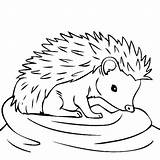 Hedgehog Coloring Hedgehogs Drawing Colouring Sheets Line Animal Colors Yahoo Boy Thirsty Results Getdrawings Printable Frozen Colored Again Bar Looking sketch template